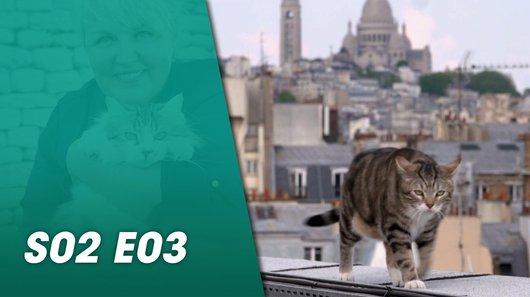 Voir le replay de l'émission La vie secrète des chats du 23/09/2018 à 18h30 sur TF1